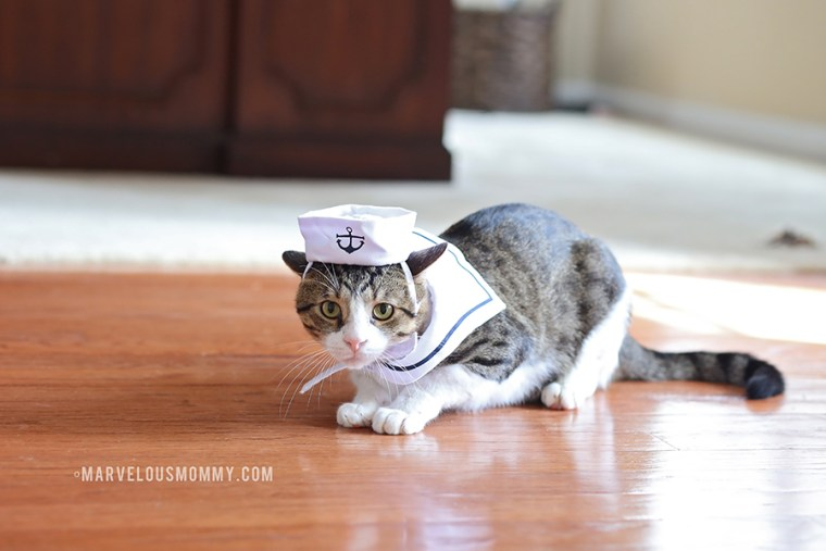 Kitty Cat Sailor Costume