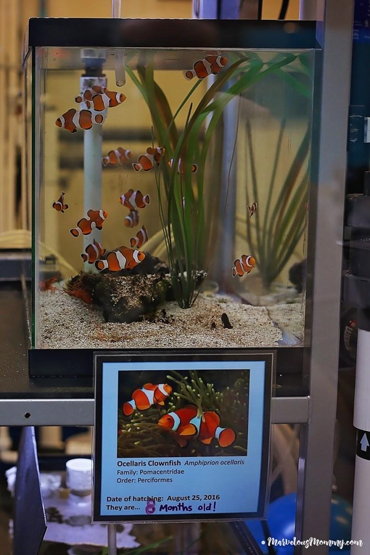 GA Aquarium-6861-2