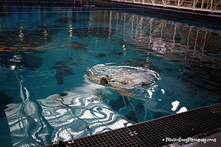 GA Aquarium-6898-2