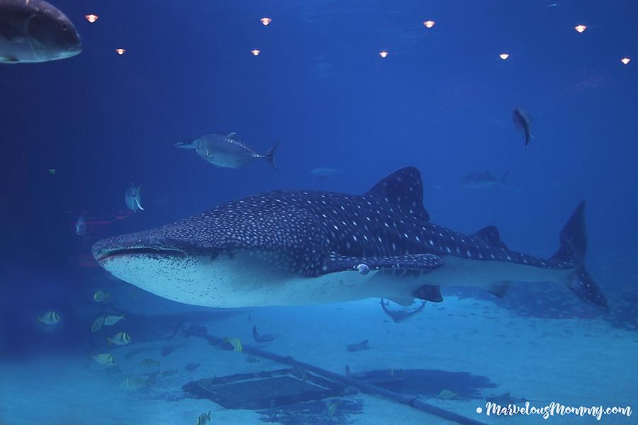 GA Aquarium-7038-2
