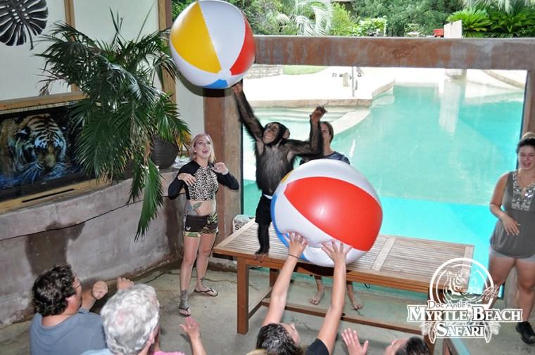 chimp (66) BLOG