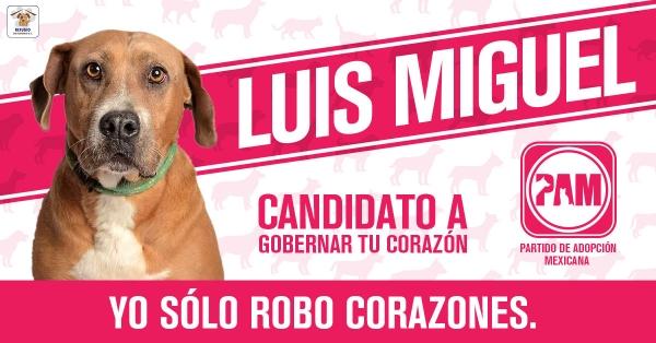 partido-de-adopcion-mexicana-refugio-de-animales-san-gregorio