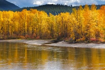 golden-autumn-leaves-web