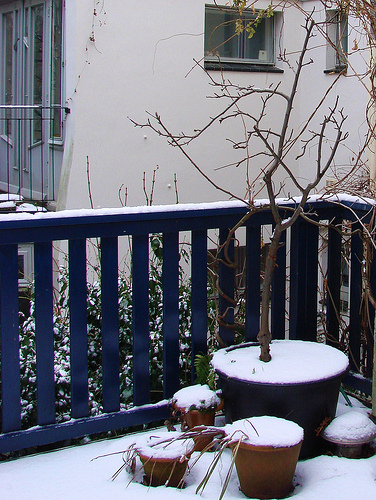Protect Your Plants from the Elements this Winter