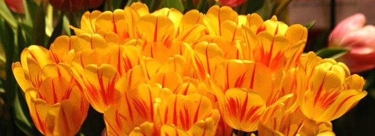 Marvin Gardens Participating in Upcoming Flower Shows