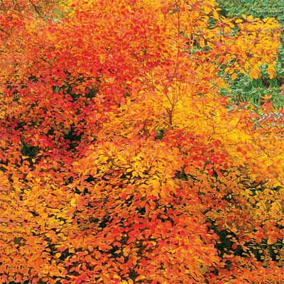 Add Some Fall Color to Your Landscape
