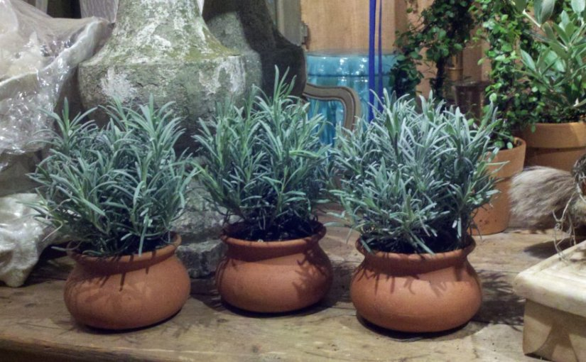Use Interior Plants as Your Hostess Gifts This Season