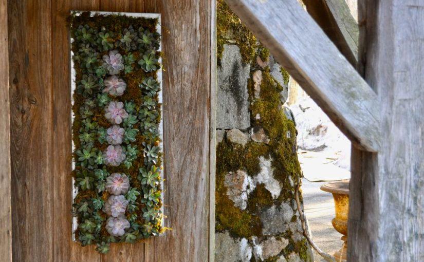 Succulent and Sedum Assortment