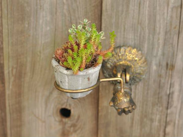 Create a Stunning Container Garden With These Tips