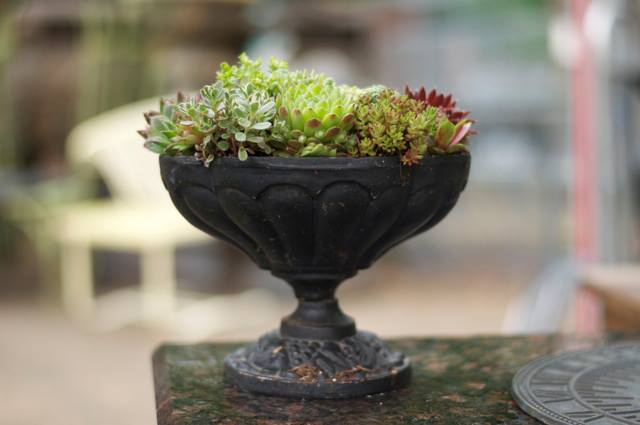 Create a Table Centerpiece From Your Garden
