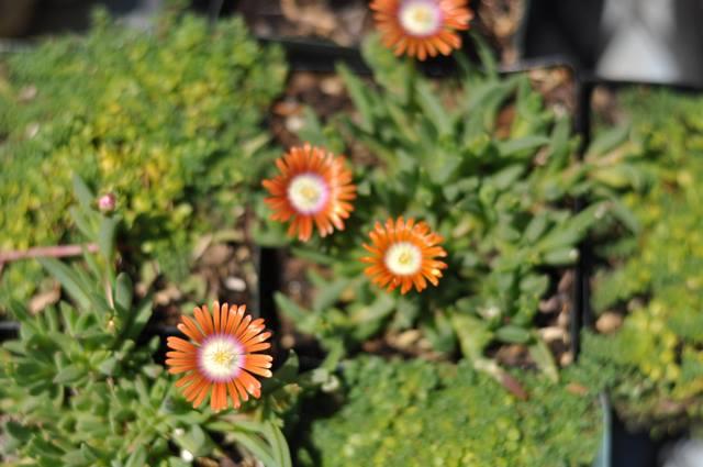 garden care ideas