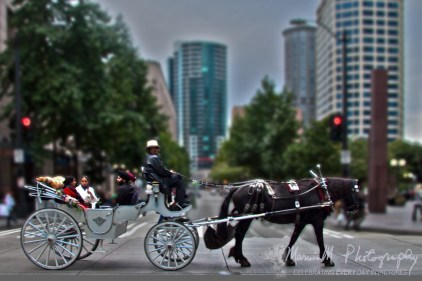 Seattle Horse Carriage on a Saturday evening