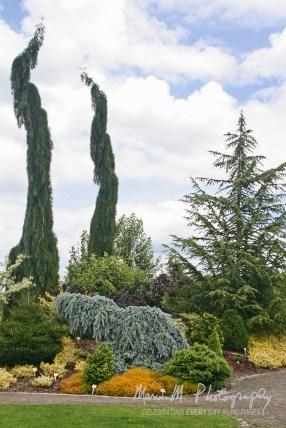 The Oregon Gardens; Silverton, Oregon