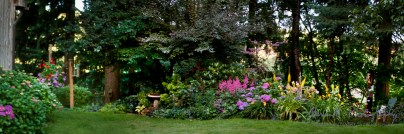 2011; Always one of our healthiest gardens