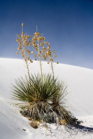 White Sands National Monument; Almagordo, NM