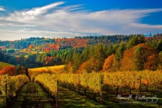 Worden Hill Road; Winderlea Vineyard & Winery