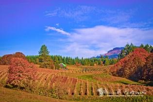 brick house vineyard