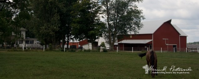 I wish I had taken better notes of this farm's location. I just remember it to be east and south of New Paris.