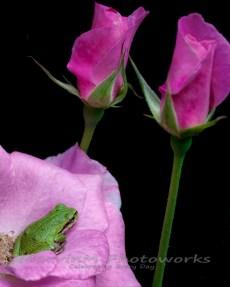 Soft Pinks 2