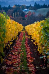 willamette, valley, oregon, vineyard, dundee