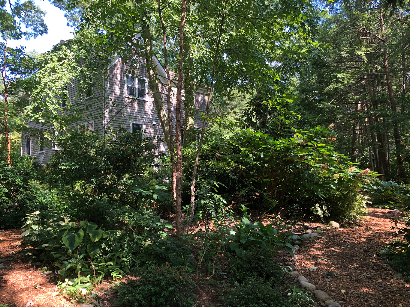 Uncle Teddy's Birch Tree