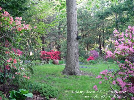 Oak Tree focal point as you emerge from the mountain laurel path from the garden of the Artist, Mary Ahern.