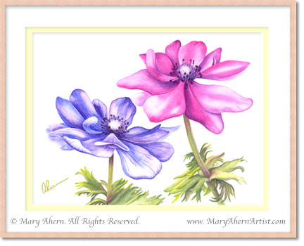 Anemone coronaria in a Watercolor Painting by the Artist, Mary Ahern.
