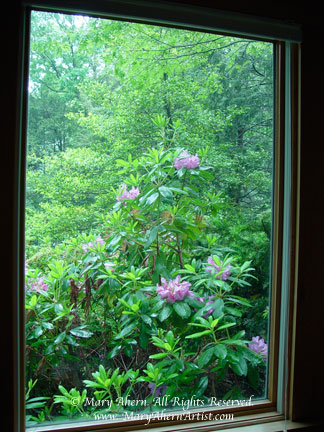 Rhododendron catawbiense in the window of the Artist, Mary Ahern