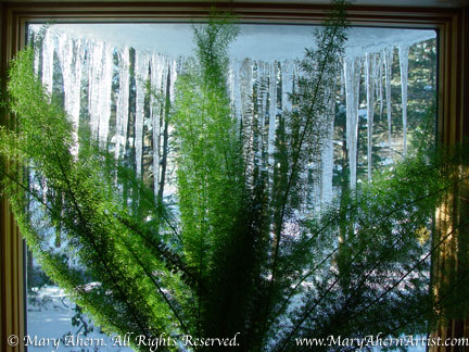 Asparagus densiflorus 'Meyeri' in December 2003