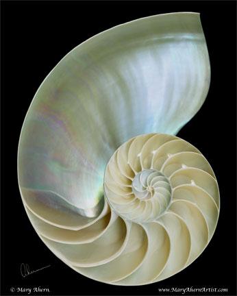 Nautilus Shell on Black Background
