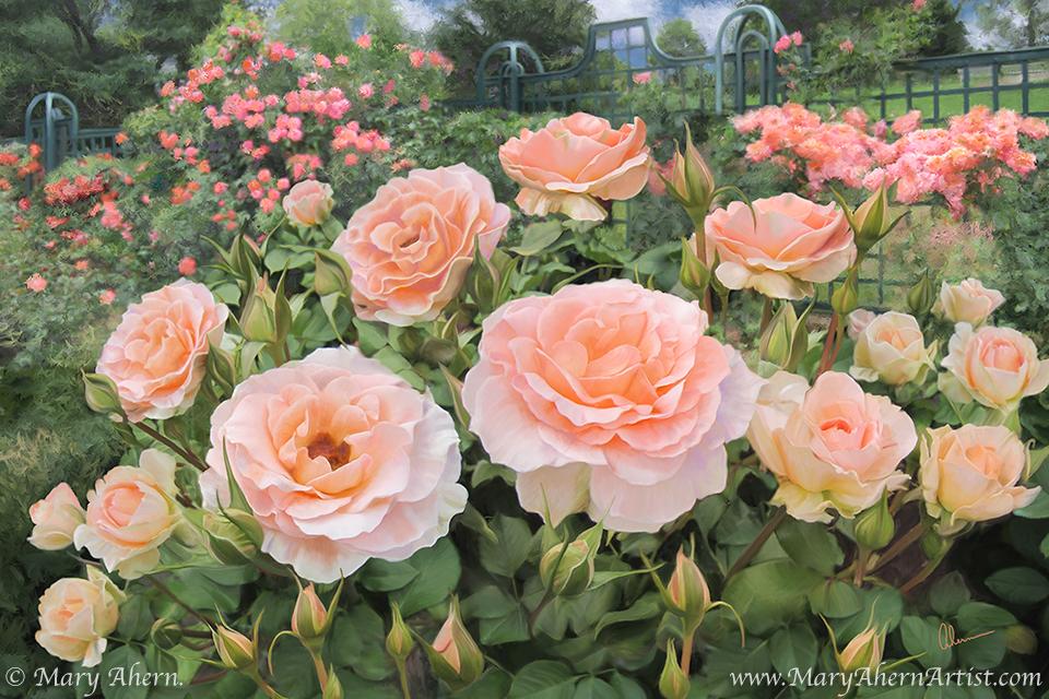 Peggy's Rose Garden