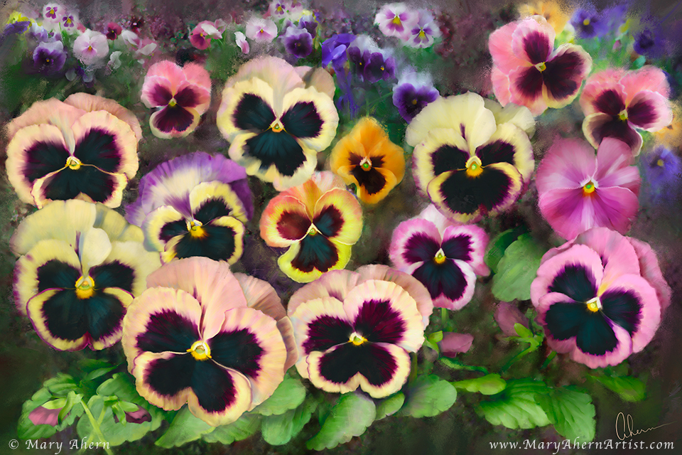 Pansy Field by the Artist, Mary Ahern