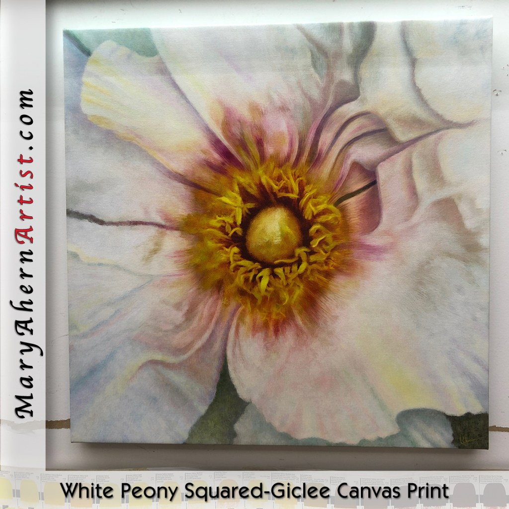 """White Poppy Squared"" Several Sizes Available. Giclee Canvas Print. Mary Ahern Artist"