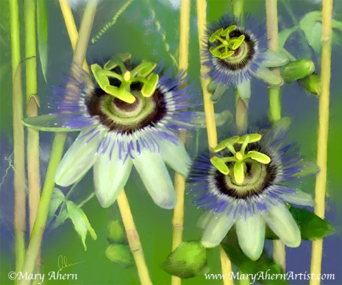 Passion Flowers with Bamboo - Painting by Mary Ahern Artist
