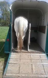 Jake waiting patiently in the trailer.