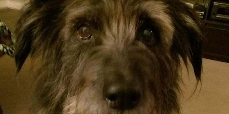 Eddie the Dog photo