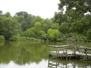 Pond & Dock-2