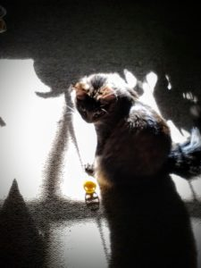 lily sitting in sun