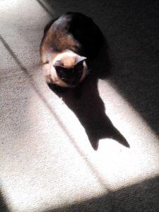 sammy & his shadow