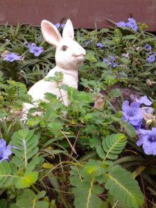 bunny-in-petunias