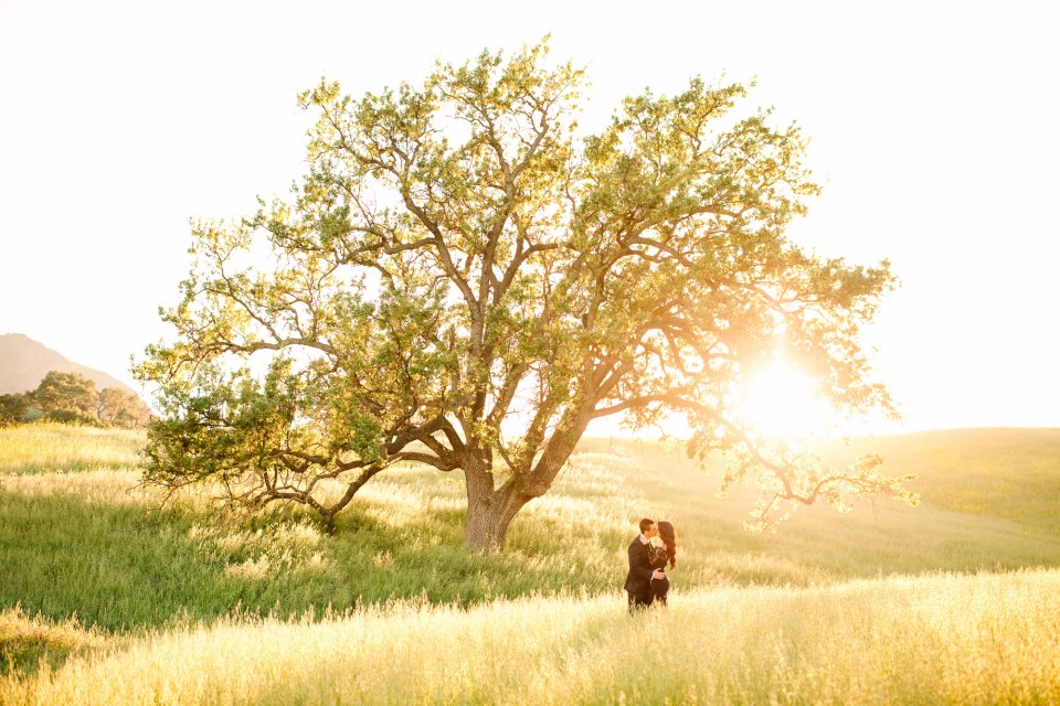 Couple with big tree during sunset by Mary Costa Photography