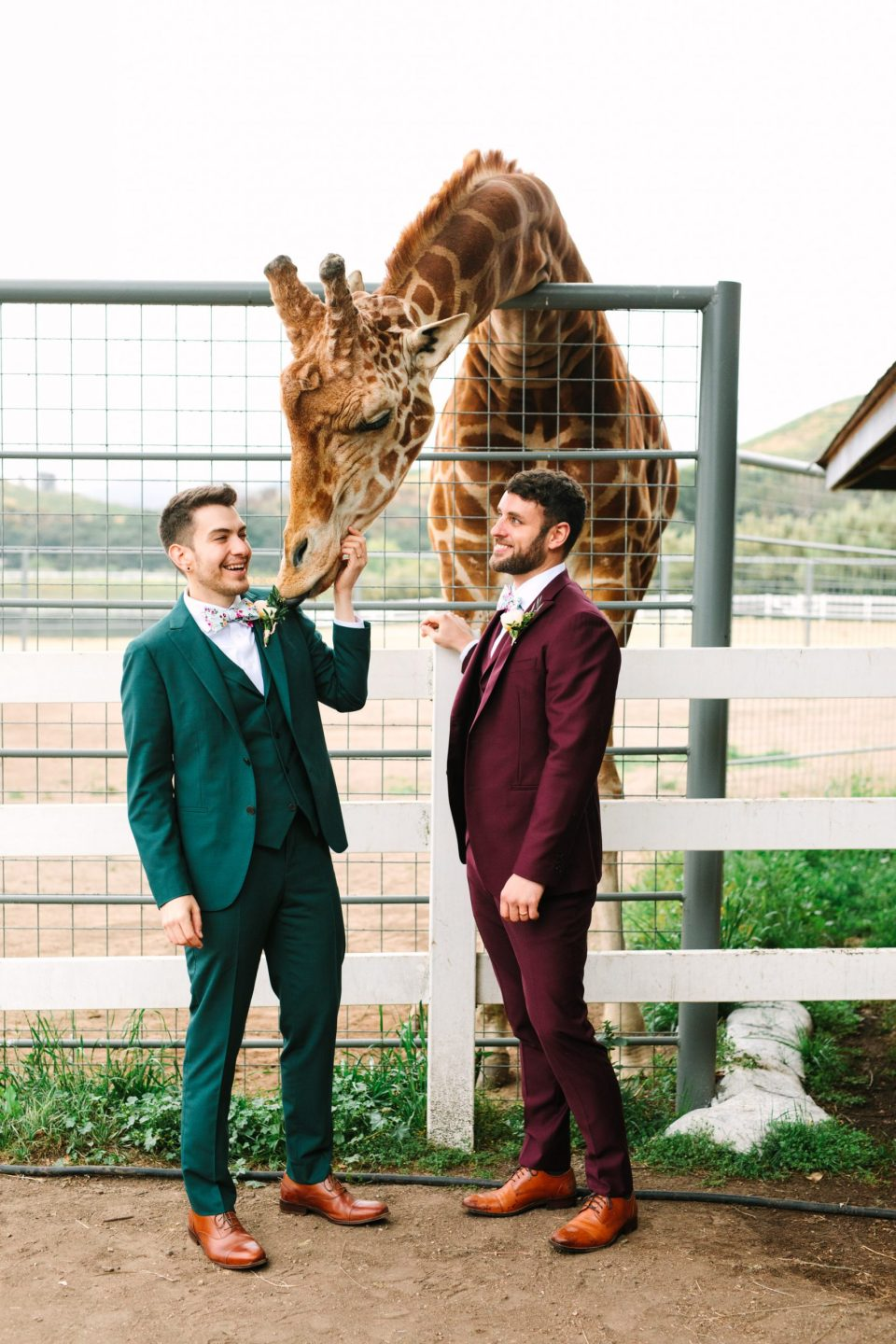 Two grooms with giraffe by Mary Costa Photography