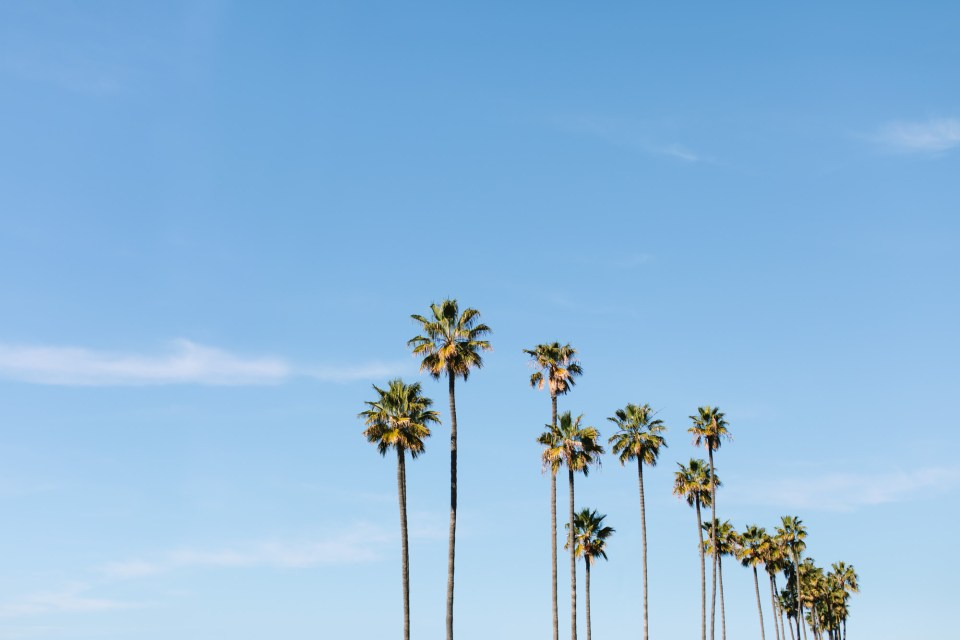 San Diego Palm Trees - www.marycostaweddings.com