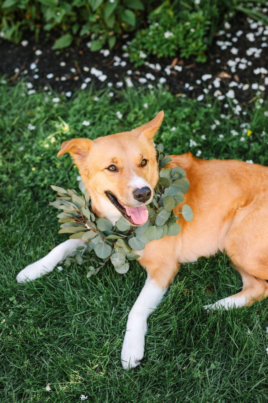 Dog with floral collar - www.marycostaweddings.com