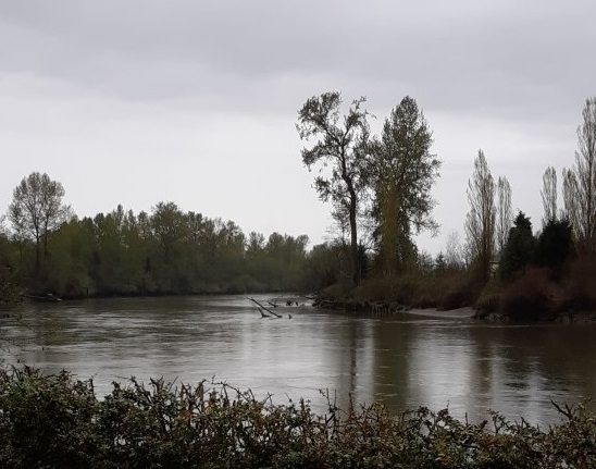 Snohomish River, Lowell park. Photo by MDessein