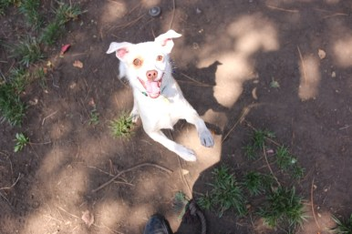 Hoshi is another adorable sweet heart who loves to jump in your lap and show you some lovin'.