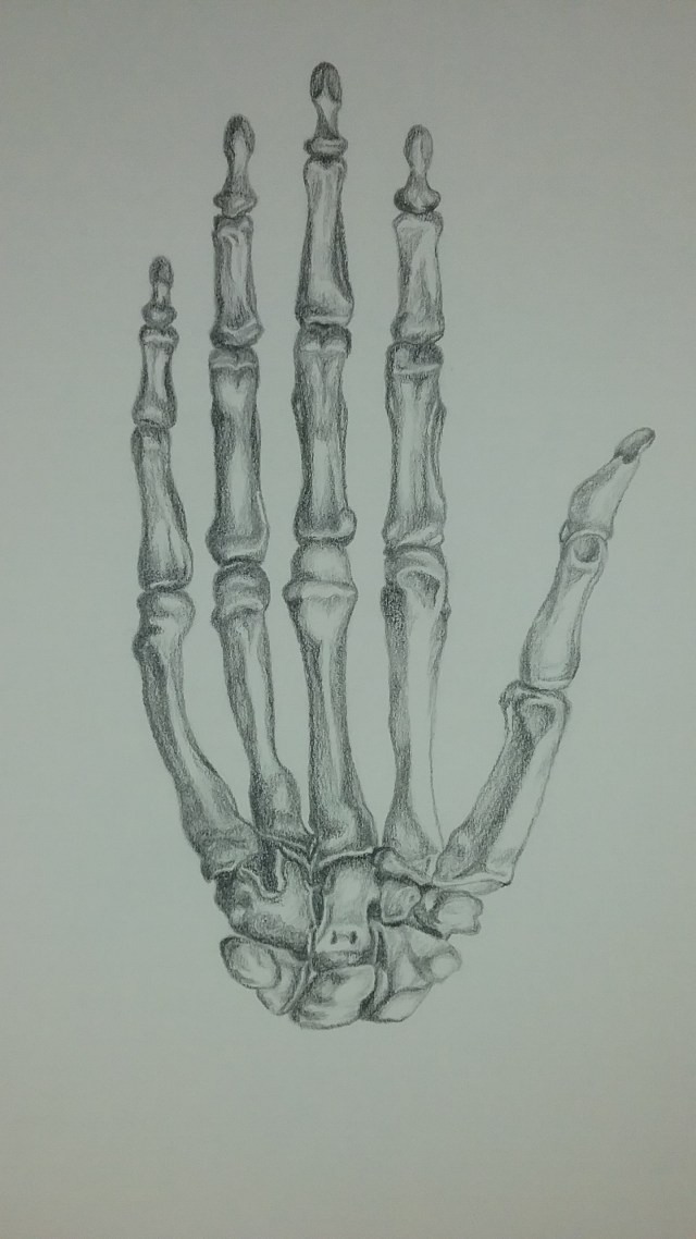 Skeletal hand by Mary Warner.