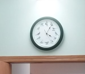 Bird clock at vet's office, Little Falls, MN, 2018. Doesn't this look like the sort of clock The Society of Avian Influencers might have?