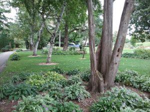 Munsinger Garden, St. Cloud, MN, Sept 13, 2019.