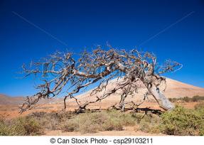 dead-fig-tree